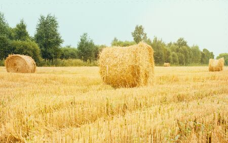 Farming, haymaking. Large sloping field, meadow. Hay bales, dry grass. Far away is a green forest, trees.