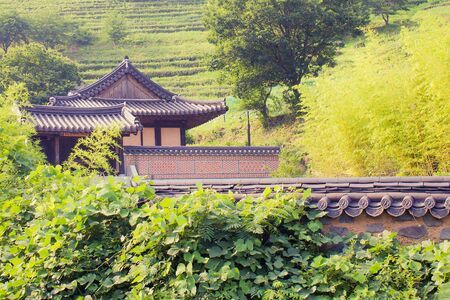 Rural landscape, manor. Traditional korean architecture. Old house with black tiles. Around the green trees, grass. Solar lighting.