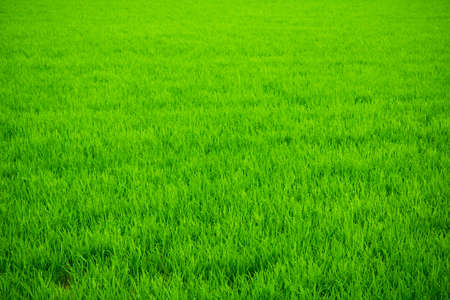 Bright green grass, endless field. Freshness, juiciness, saturation. Vignetting.