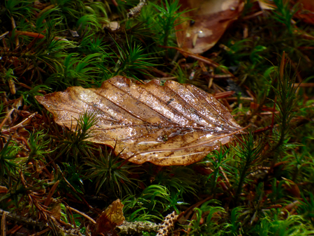 Close up view of a fallen leaves