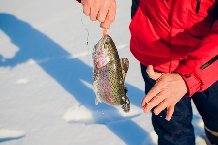 A fishermans success on a cold winters day on top of a frozen lake fish trout