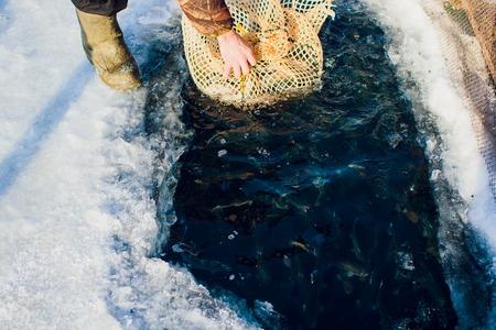 farm trout winter ice-hole fish lake catching a mace food Stock Photo
