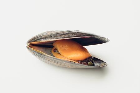 白い背景のシーフードにゆでたムール貝