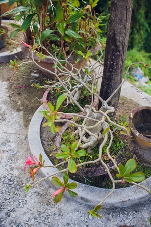a small beautiful tree growing near a temple