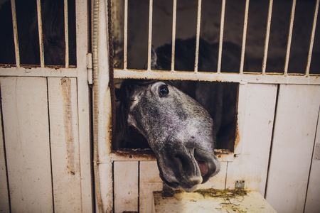 black Horse head poking out a stable door