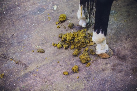 Feces of horses. Feces of horses eating grass on the ground.
