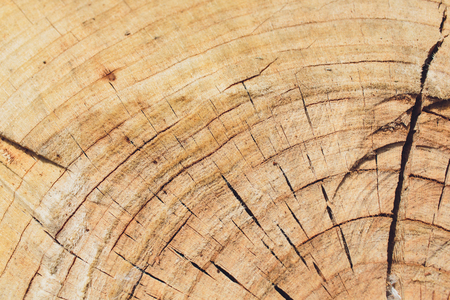 Structure of an old tree with slits. Stock Photo