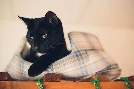 cute cat A cat portrait. cat is posing in a home.