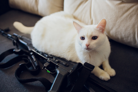 Cat and handgun and the word war, built of ammunition