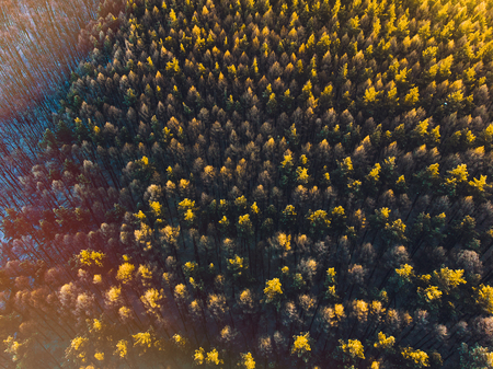 Aerial shot of a beautiful green forest. View of the setting sun Stock Photo