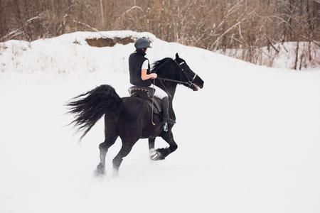 Friesian stallion running in winter field. Rider young girl is riding gallop on horse in snow, in background forest. Concept horseback riding Imagens