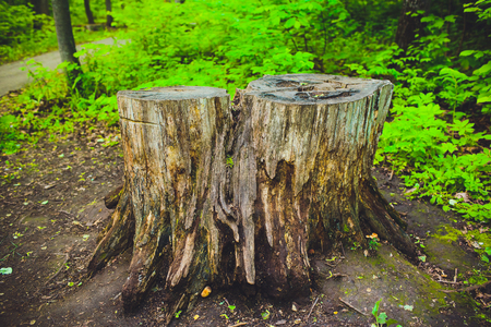old stump on green grass or graden