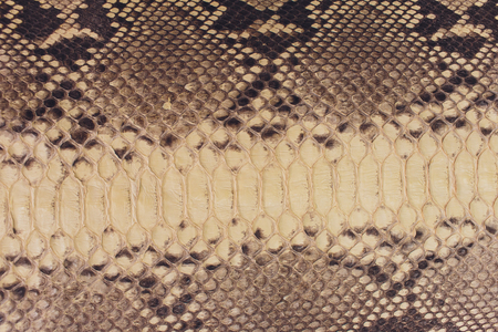 Snake skin, can use as background pattern leather.