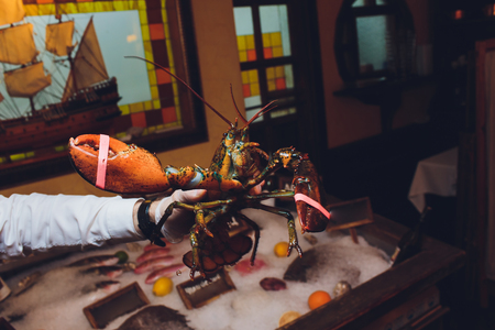 Lobster. A hand holding a giant lobster at a seafood buffet. Soft focus on the lobster.