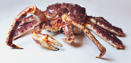 Live King Crab on white succinct background.
