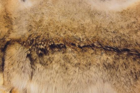 Texture of natural rabbit fur close-up. Background. Reklamní fotografie