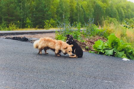 Two silly mutts play fighting on grassy embankment before a pond. Imagens