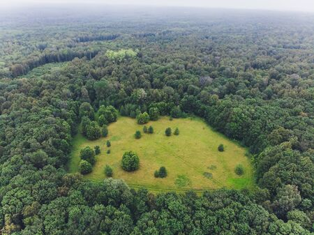 Top view from the drone to the green forest. Stok Fotoğraf