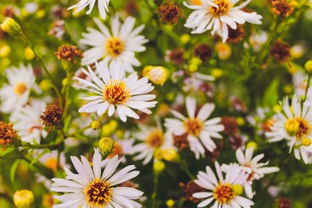 Summer bright landscape with beautiful wild flowers camomiles. Stok Fotoğraf