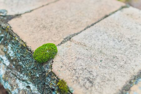 Old gray stone wall with green moss texture background.