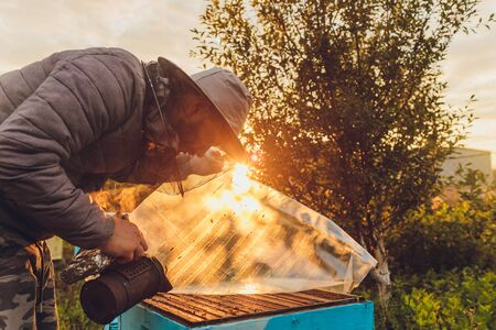 Frames of a bee hive. Beekeeper harvesting honey. The bee smoker is used to calm bees before frame removal. Beekeeper Inspecting Bee Hive.