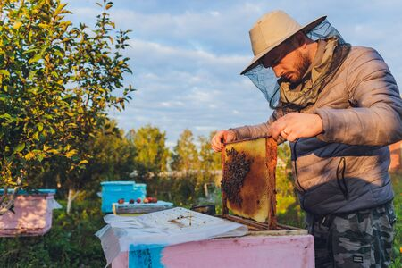 Experienced beekeeper grandfather teaches his grandson caring for bees. Apiculture. The concept of transfer of experience.