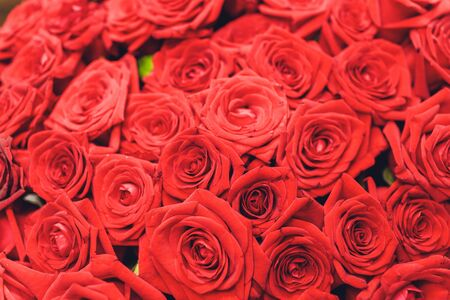 Natural red roses background. Border of Red roses bouquet Stock Photo