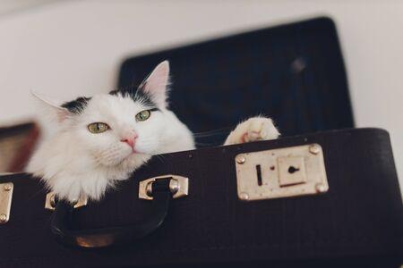 Lovely cat lying on the traveling bag.