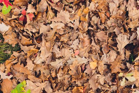 A lot of yellow and orange dry leaves lying on the ground