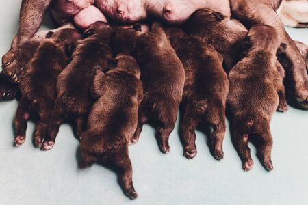 Dogs mom feed the puppies little puppiess feet