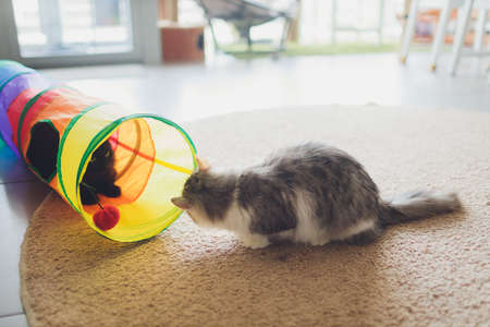 Cute kitten playing in a cat tunnel.