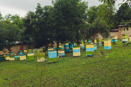 A row of bee hives in a field of flowers with an orchard behind.