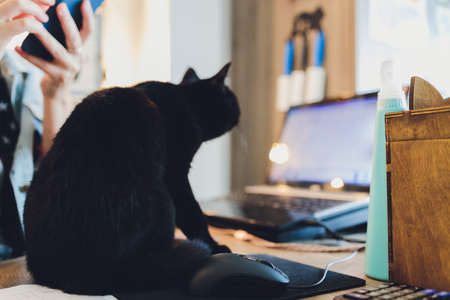 Black cat on lying on table with laptop.