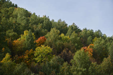 A top view of colourful forest trees and lake in the autumn season. Reklamní fotografie