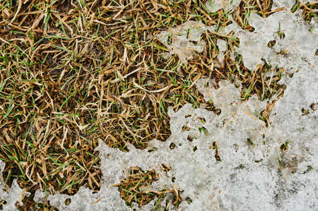 Background from first snow on green grass. Winter is coming. Stock fotó