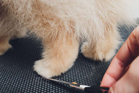 professional groomer trimming long-haried dog paws, animal foot care cuting fur.