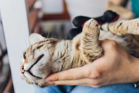 Man grooming cat with special gloves. Pet care. Stockfoto