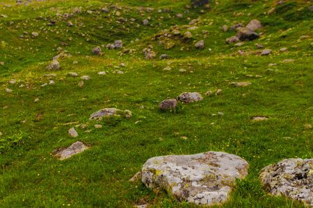 Big rocks stones on mountains grass valley. Wild flowers. Nature background 写真素材