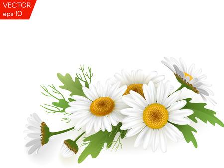 Realistisches Gänseblümchen des Blumenstraußes, Kamillenblumen auf weißem Hintergrund. Vektor-Illustration-Karte Standard-Bild - 74494809