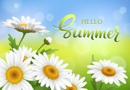 Hello Summer handmade lettering and meadow with realistic daisy, camomile flowers on transparent background. Vector illustration