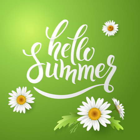 Hello Summer handmade lettering and realistic daisy, camomile flowers on green background. Vector illustration card Illustration