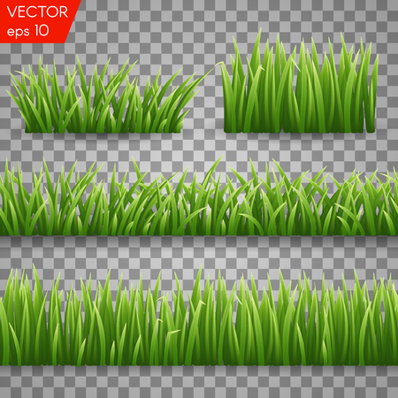 Green grass seemless borders and herbs elements isolated on Transparent background. Vector Illustration