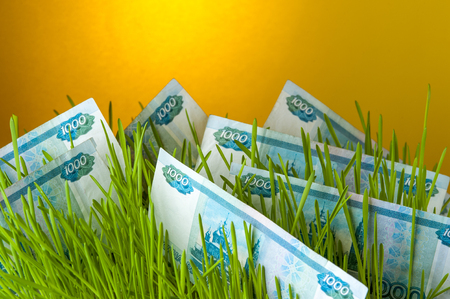 upgrowth: Ruble bills among green grass.
