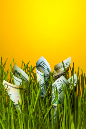 upgrowth: Dollars growing in green grass. Stock Photo
