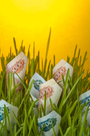 upgrowth: Ruble bills growing in green grass. Stock Photo