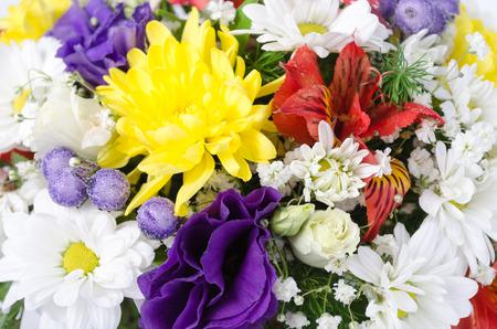 Zwei Verschiedene Arten Von Blumen Gladiolen Auf Einem Weißen ...
