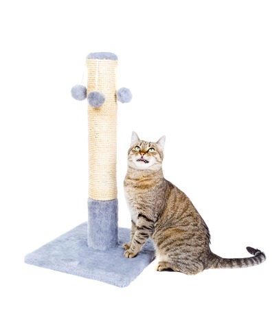 Beautiful cat with scratching post isolated on white background Stock Photo