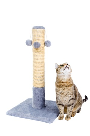 Beautiful cat with scratching post isolated on white background