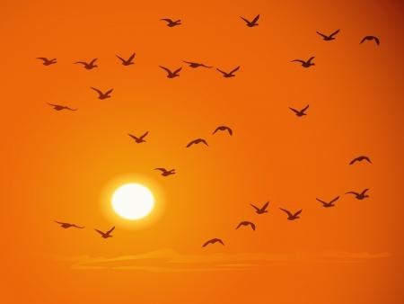 Oiseaux qui volent contre coucher du soleil orange