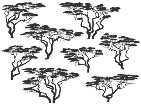haya: Conjunto de vectores de siluetas de las acacias africanas aisladas en blanco.